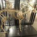 写真: 北大博物館その15