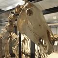 写真: 北大博物館その17