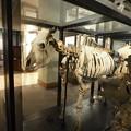 写真: 北大博物館その22