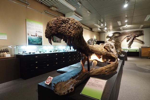 北大博物館その44