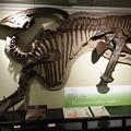 写真: 北大博物館その60