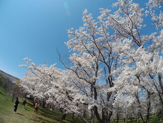 戸田記念墓地公園その7
