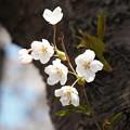 写真: 戸田記念墓地公園その13