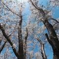 写真: 戸田記念墓地公園その14