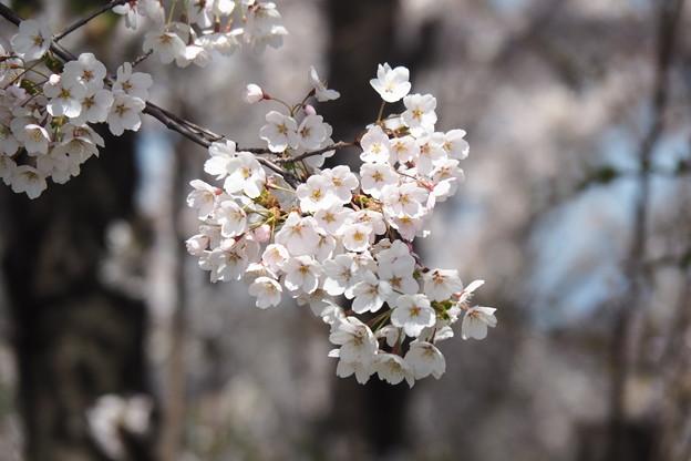 戸田記念墓地公園その15