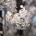 写真: 戸田記念墓地公園その15