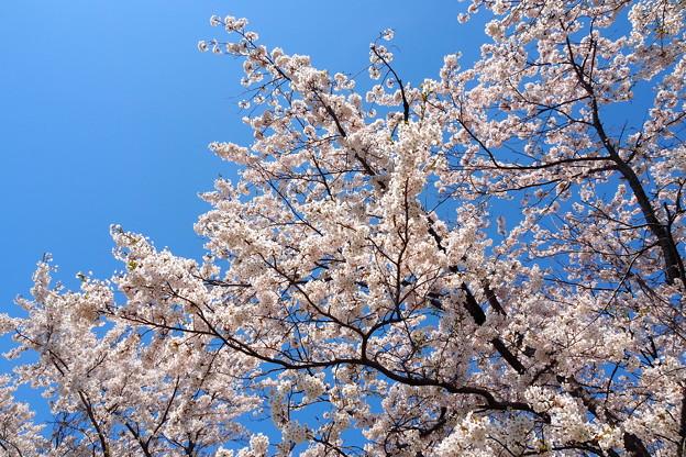 戸田記念墓地公園その16