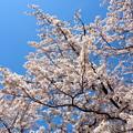写真: 戸田記念墓地公園その16