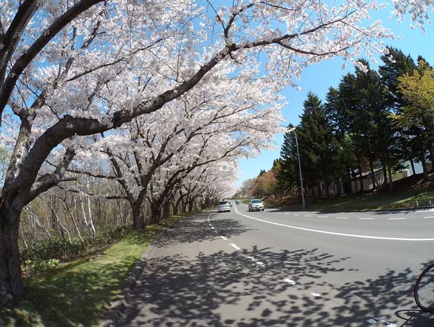 戸田記念墓地公園その24