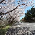 写真: 戸田記念墓地公園その24