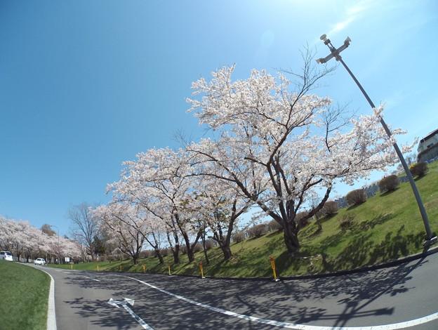 Photos: 戸田記念墓地公園その28