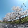 写真: 戸田記念墓地公園その28
