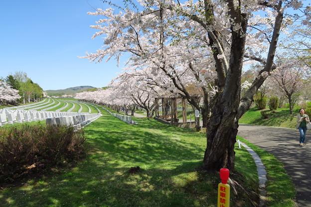 戸田記念墓地公園その30