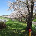 写真: 戸田記念墓地公園その30