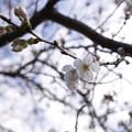 Photos: 御塔坂橋付近