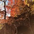 Photos: 愛岐トンネル群 秋の特別公開 IMG_E1480