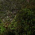 写真: 苔の山