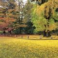 銀杏の絨毯・一條邸跡