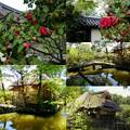 神苑の芦の円屋