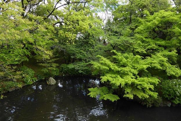 Photos: 新緑の京都