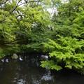 新緑の京都