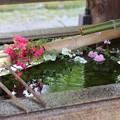 Photos: 緑の水盤