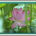 写真: 葉月カレンダー