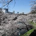 Photos: 花の雲
