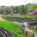 八重桜のシーズン