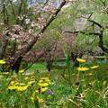 Photos: 春の野