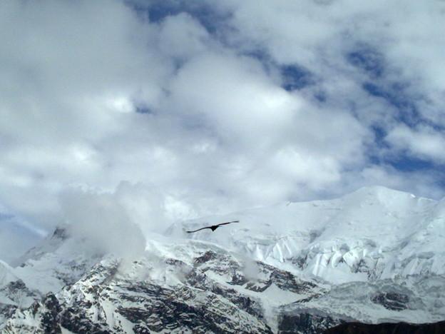 Eagle above mountains
