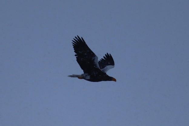 写真: 豪雪の翼