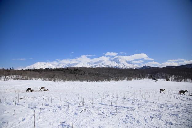 写真: 知床連山