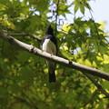 九州の夏鳥