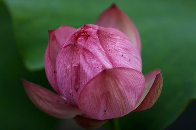 Lotus 1-2-3