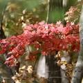 写真: 北海道の秋