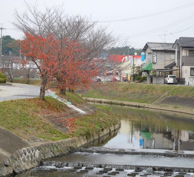 竜田川 (1)