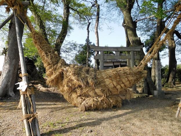 素戔嗚神社 (2)