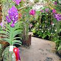 沖縄国際洋蘭博覧会(気根で成長するラン)