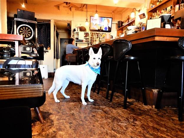 喫茶店の小雪2歳 (1)