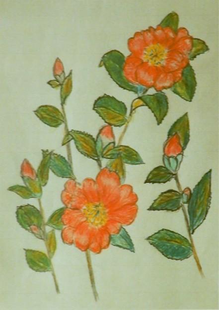 山茶花(第168回展)