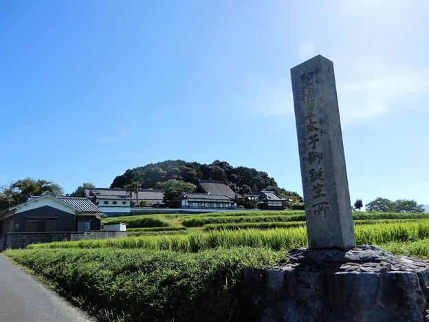 25橘寺遠望