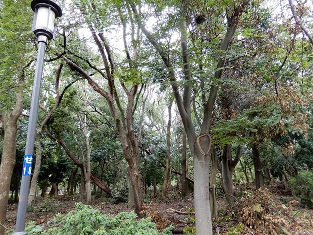大阪城公園 (1)