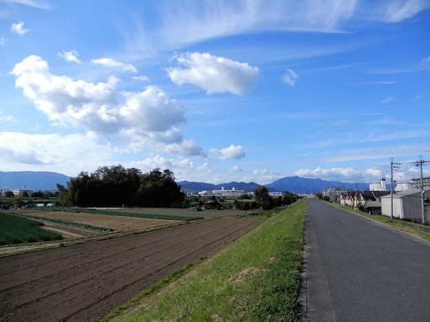 16桂川沿い自転車道 (1)
