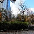 梅田の里山 (2)