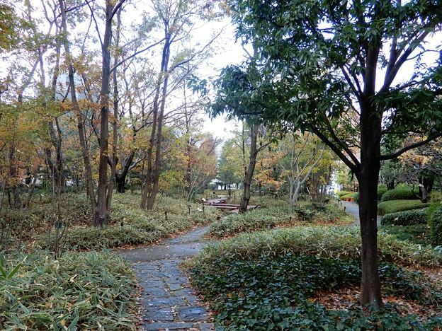梅田の里山 (3)