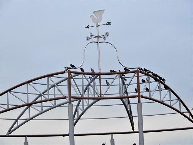 風見鶏と鳩