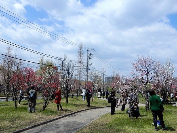 大阪城桃園 (2)
