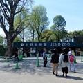 Photos: 15上野動物園