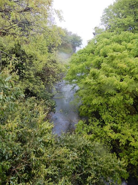 11久々子湖から水月湖への渓流 (1)